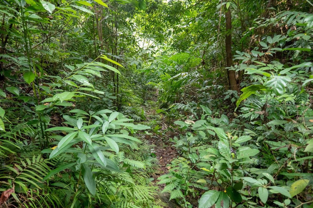 Kep National Park Cambodia Hiking Trails