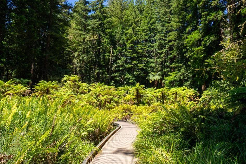 Rotorua walks - free walks in Rotorua Whakarewarewa and Redwoods forest