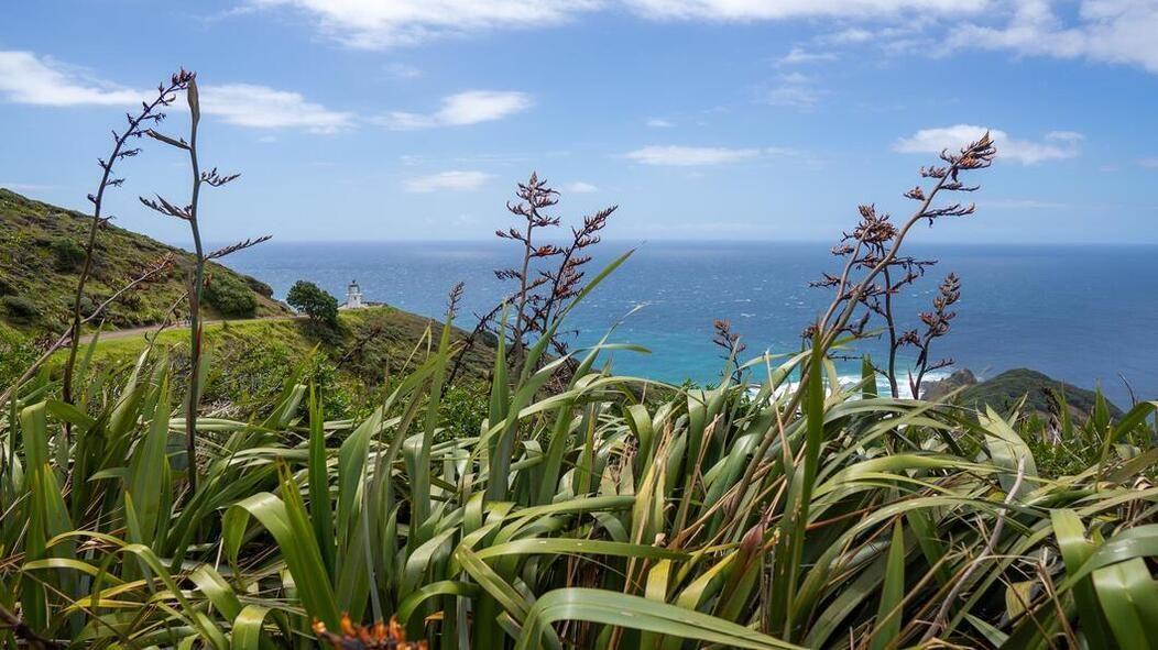 Auckland to Cape Reinga road trip - Cape Reinga Lighthouse